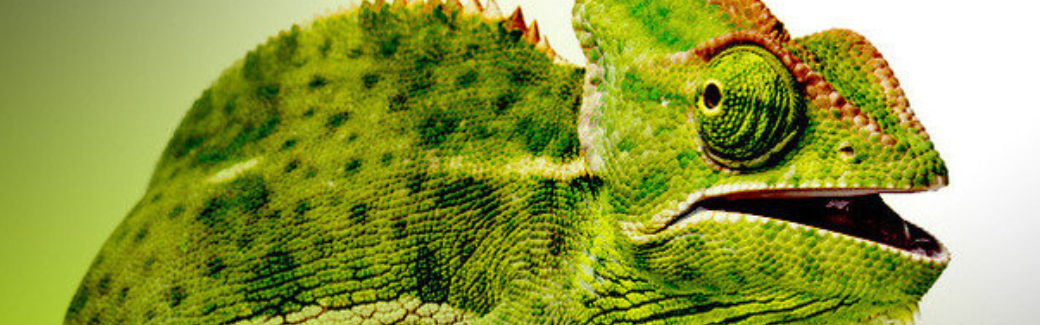 banner-suse-001